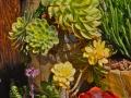 Aeonium 'Sunburst', Echeverias, Kalanchoes, and Crassulas in Dish Garden ~ Fiesta de Reyes