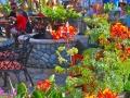 Garden Dining ~ Fiesta de Reyes